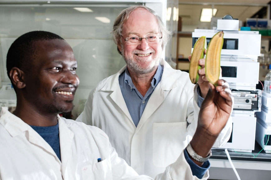 Thursday 19 June 2014. Ugandan PhD researcher Stephen Buah is studying the nutritional value of bananas with Professor James Dales' Team at QUT with the assistance of a Bill Gates Foundation Scholarship. Photo:QUT Marketing and Communication/Erika Fish. PH:0731385003.